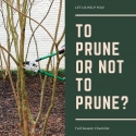 Pruning, Demystified.